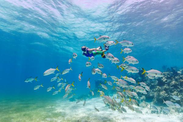snorkeller with a school of horse-eye jack fish at Smith's Reef off Providenciales