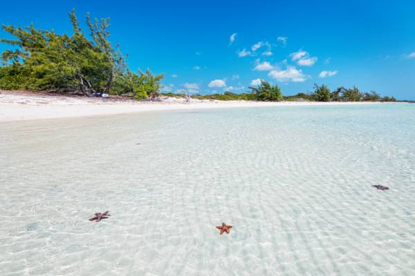 red thorny starfish in the shallow water at Bermudian Harbour Bay in the Turks and Caicos
