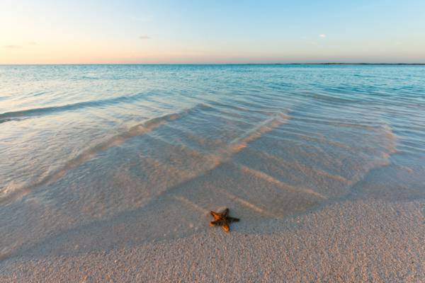 red thorny starfish on the beach at Bonefish Point on Providenciales at sunset