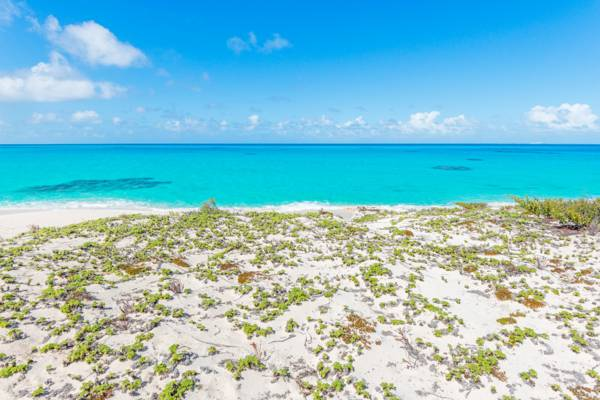 dune vegetation and the turquoise ocean at North Bay on Salt Cay