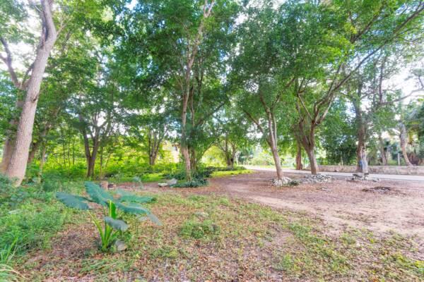 trees at Kew on North Caicos