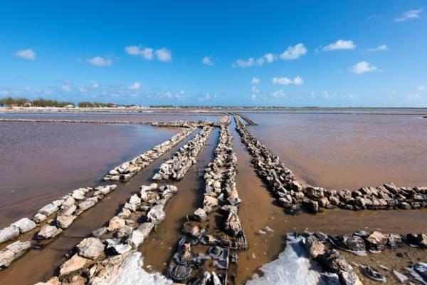 channel walls in the sea salt salinas on Salt Cay
