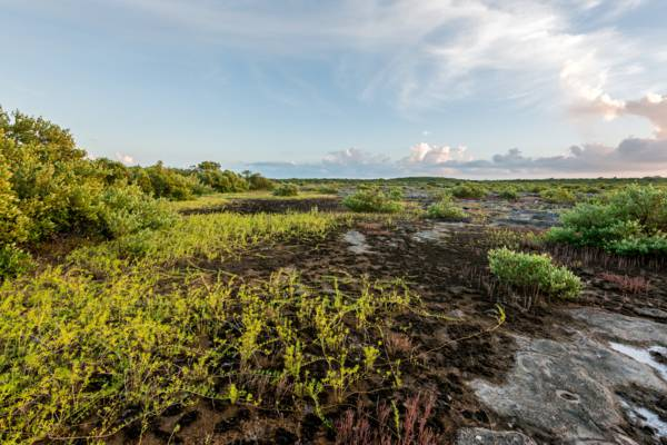 wetlands at the Bird Rock Trail in the Turks and Caicos