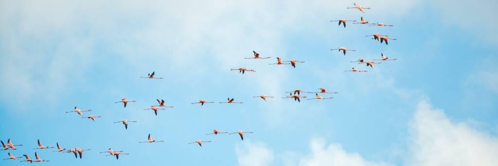 flamingos in Turks and Caicos