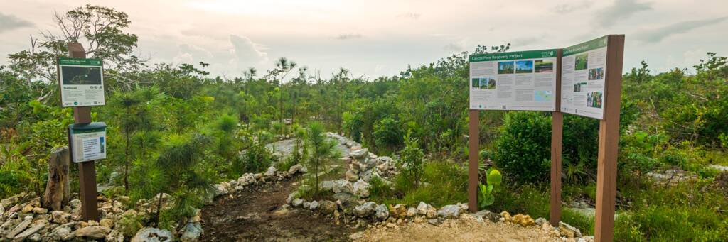 the Caicos Pine Yard trail on Middle Caicos