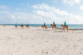 The Best Grand Turk Horseback Riding Tours Visit Turks
