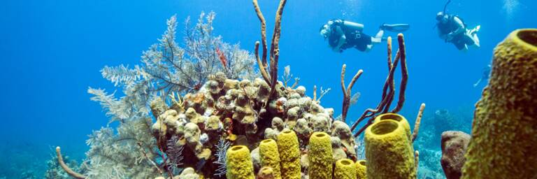 scuba divers with soft coral and tube sponges in the Turks and Caicos