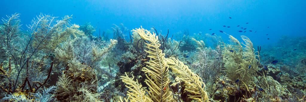 North Caicos and Middle Caicos scuba diving