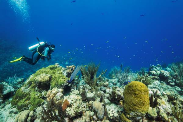 vibrant reef and sea life with scuba diver in the Turks and Caicos