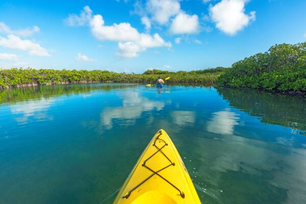 red mangrove estuary in Turks and Caicos