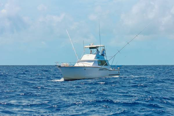 Providenciales fishing visit turks and caicos islands for Turks and caicos fishing