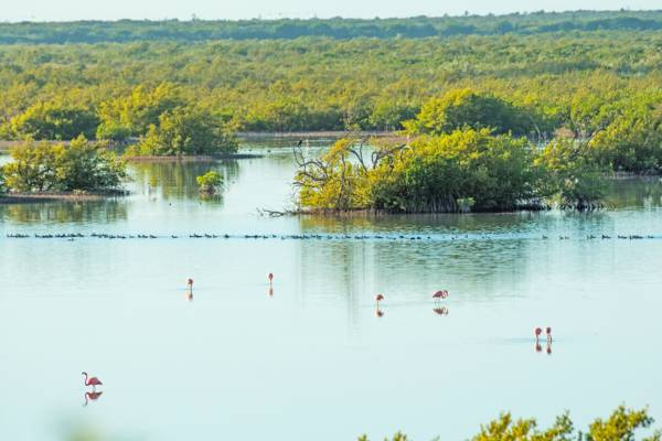 Flamingo Pond Overlook on North Caicos in the Turks and Caicos
