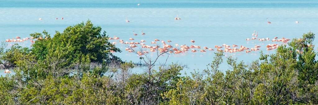flamingos and bird life at Flamingo Pond Overlook