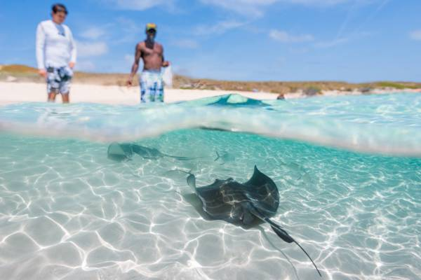 stingrays in the clear water at Gibbs Cay
