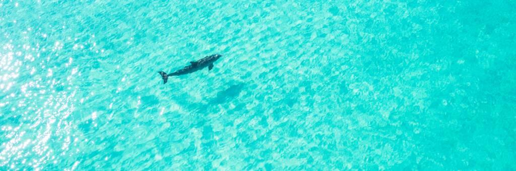 Jojo the Dolphin at Grace Bay