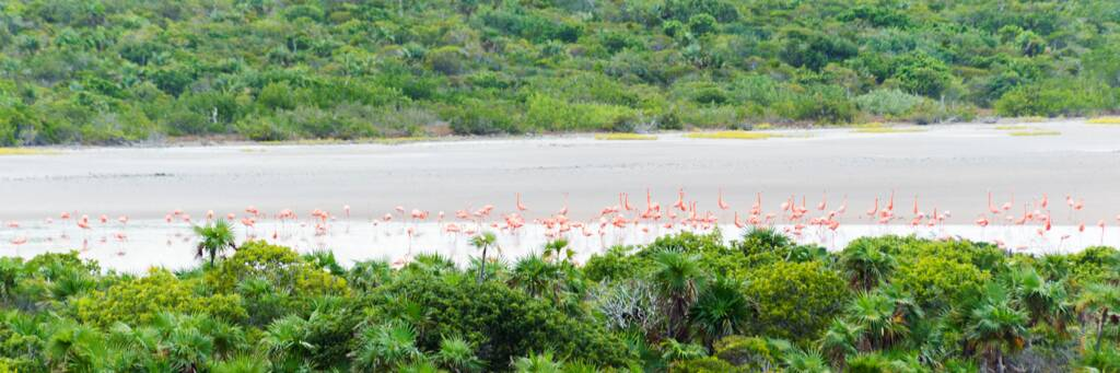 Caribbean flamingos (Phoenicopterus ruber) in the Lake Catherine Nature Reserve on West Caicos