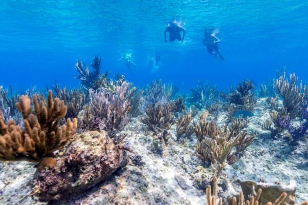 snorkelling at Leeward Reef near Providenciales