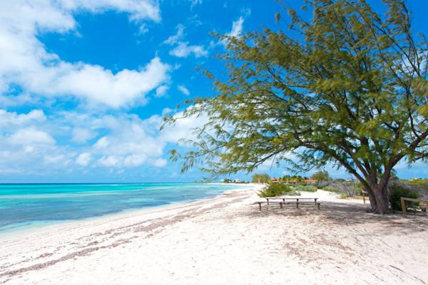 casuarina tree on at the tranquil Pillory Beach