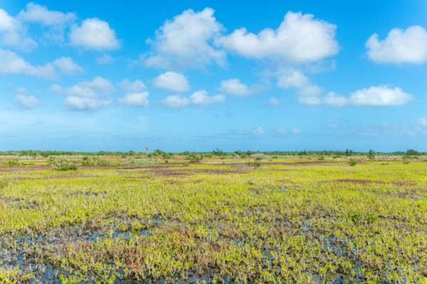 Ramsar Nature Reserve on Middle Caicos