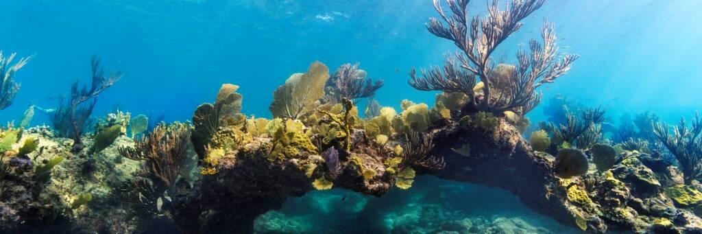 Caicos Islands barrier reef