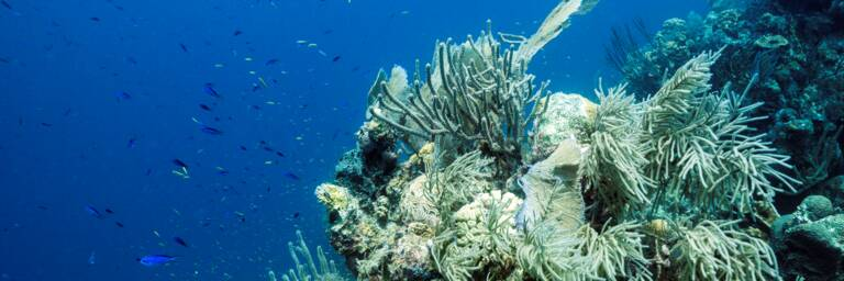 Grand Turk reef
