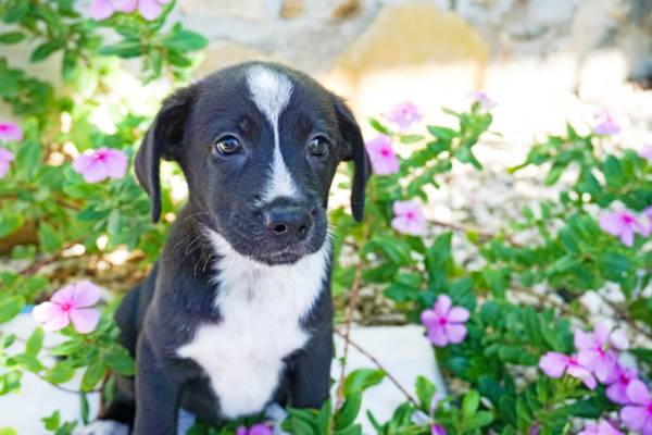 Potcake puppy in Turks and Caicos