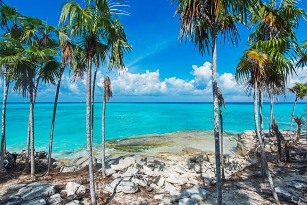 coastal thatch palm forest on the beach of Water Cay