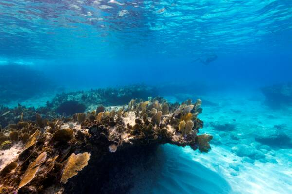 reef in the West Caicos Marine National Park